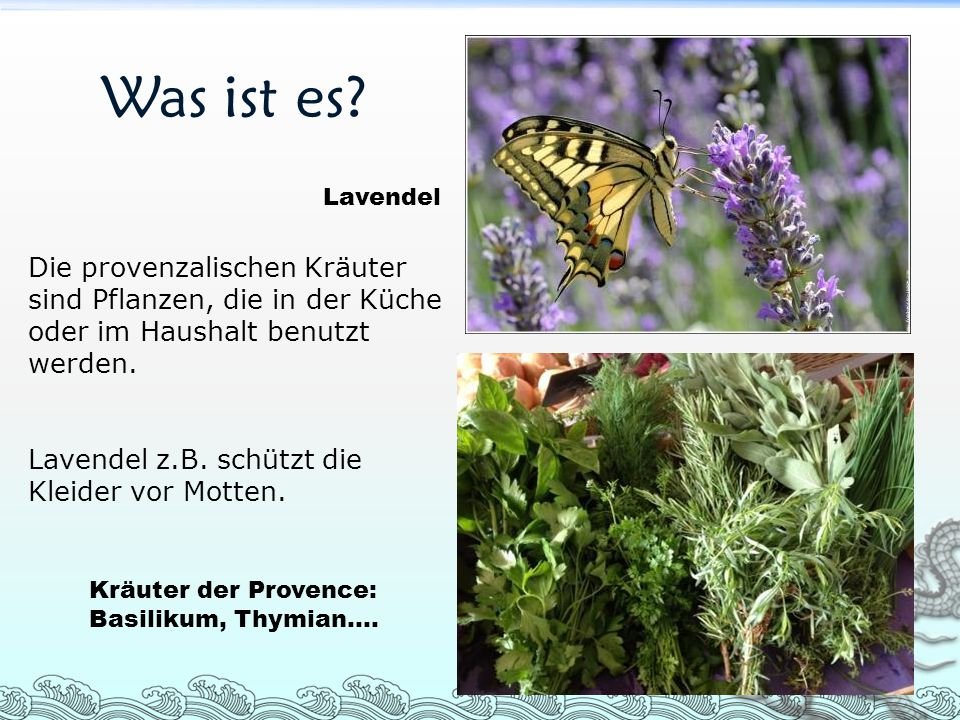 Was ist es? Die provenzalischen Kräuter sind Pflanzen, die in der Küche oder im Haushalt benutzt werden. Lavendel z.B. schützt die Kleider vor Motten.