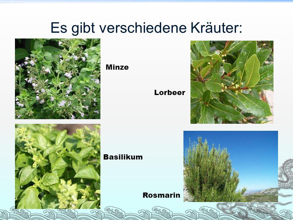Es gibt verschiedene Kräuter: Minze Lorbeer Basilikum Rosmarin