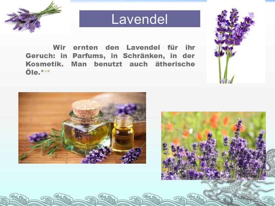 Wir ernten den Lavendel für ihr Geruch: in Parfums, in Schränken, in der Kosmetik. Man benutzt auch ätherische Öle.* ** Lavendel