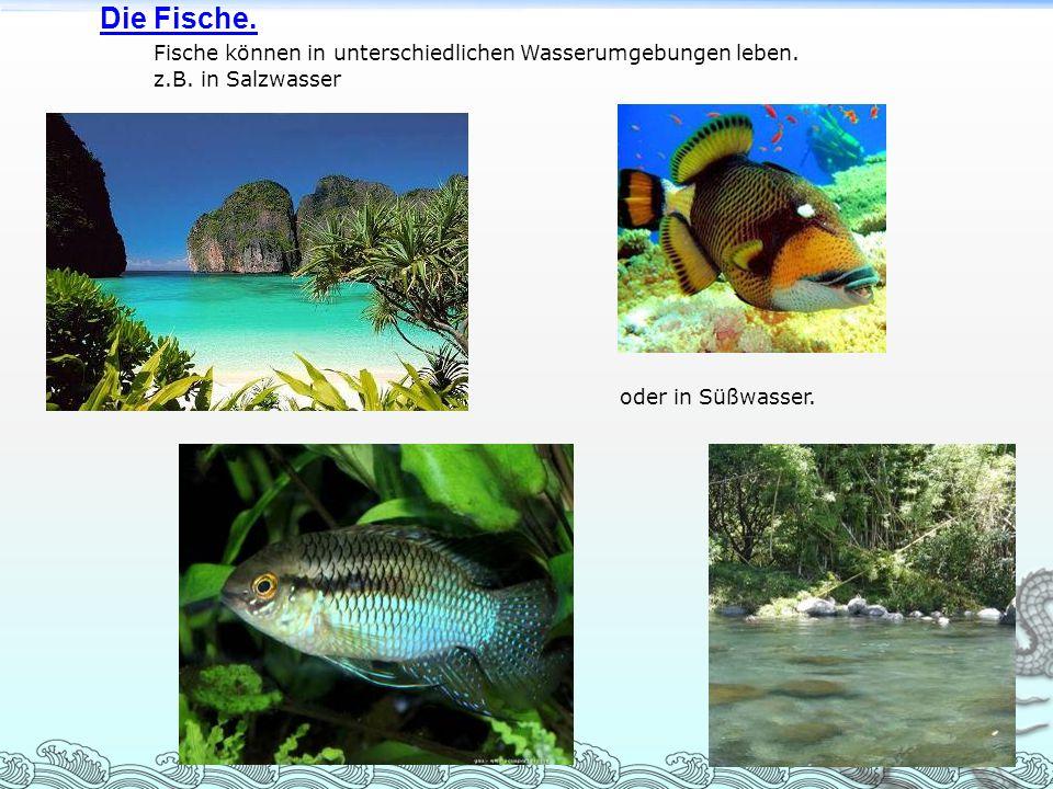 Die Fische. Fische können in unterschiedlichen Wasserumgebungen leben. z.B. in Salzwasser oder in Süßwasser.