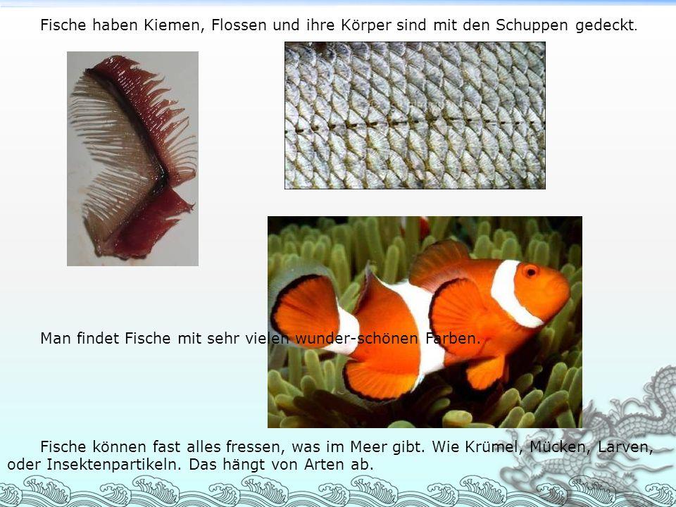 Fische haben Kiemen, Flossen und ihre Körper sind mit den Schuppen gedeckt. Man findet Fische mit sehr vielen wunder-schönen Farben. Fische können fas