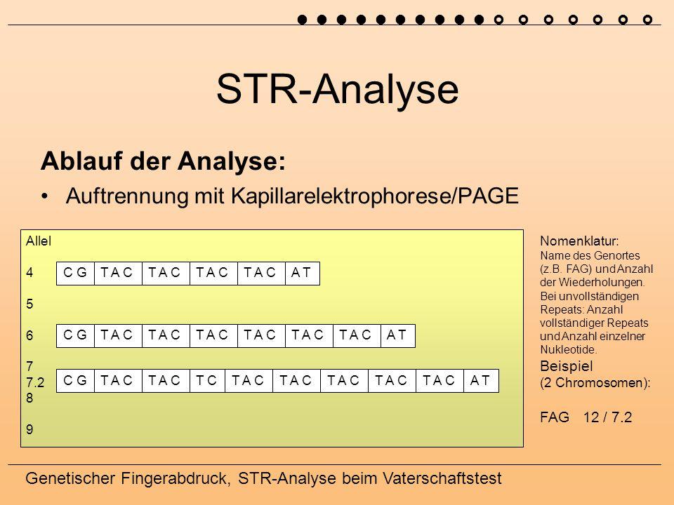 Genetischer Fingerabdruck, STR-Analyse beim Vaterschaftstest STR-Analyse Ablauf der Analyse: Auftrennung mit Kapillarelektrophorese/PAGE C GT A C A TC GT A C A TT A CC GT A C T CT A C A TT A C Allel 4 5 6 7 7.2 8 9 Nomenklatur: Name des Genortes (z.B.