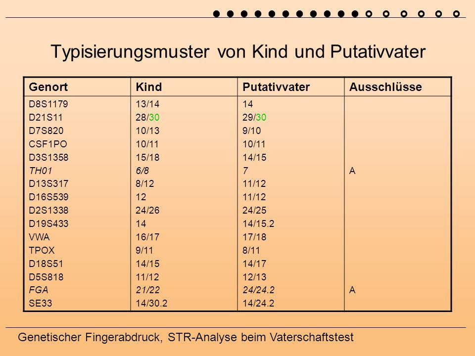 Genetischer Fingerabdruck, STR-Analyse beim Vaterschaftstest Typisierungsmuster von Kind und Putativvater GenortKindPutativvaterAusschlüsse D8S1179 D21S11 D7S820 CSF1PO D3S1358 TH01 D13S317 D16S539 D2S1338 D19S433 VWA TPOX D18S51 D5S818 FGA SE33 13/14 28/30 10/13 10/11 15/18 6/8 8/12 12 24/26 14 16/17 9/11 14/15 11/12 21/22 14/30.2 14 29/30 9/10 10/11 14/15 7 11/12 24/25 14/15.2 17/18 8/11 14/17 12/13 24/24.2 14/24.2 AAAA 