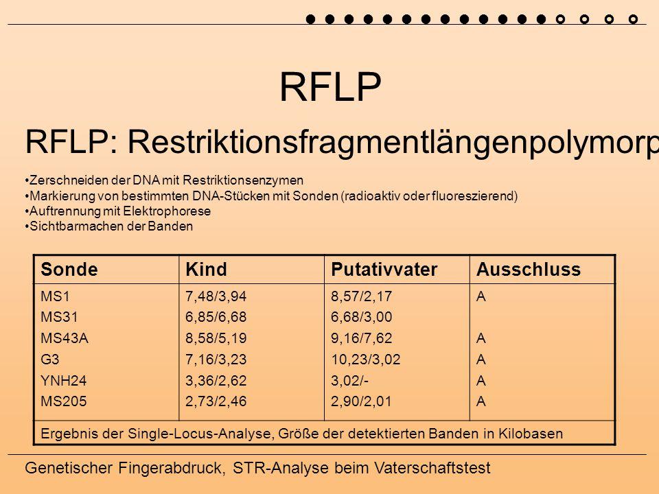 Genetischer Fingerabdruck, STR-Analyse beim Vaterschaftstest RFLP RFLP: Restriktionsfragmentlängenpolymorphismus Zerschneiden der DNA mit Restriktionsenzymen Markierung von bestimmten DNA-Stücken mit Sonden (radioaktiv oder fluoreszierend) Auftrennung mit Elektrophorese Sichtbarmachen der Banden SondeKindPutativvaterAusschluss MS1 MS31 MS43A G3 YNH24 MS205 7,48/3,94 6,85/6,68 8,58/5,19 7,16/3,23 3,36/2,62 2,73/2,46 8,57/2,17 6,68/3,00 9,16/7,62 10,23/3,02 3,02/- 2,90/2,01 AAAAAAAAAA Ergebnis der Single-Locus-Analyse, Größe der detektierten Banden in Kilobasen 