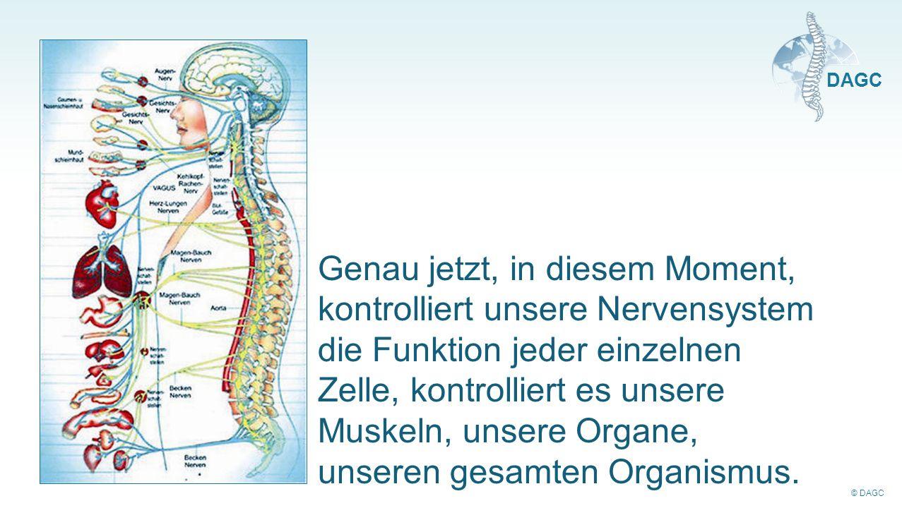 © DAGC DAGC Genau jetzt, in diesem Moment, kontrolliert unsere Nervensystem die Funktion jeder einzelnen Zelle, kontrolliert es unsere Muskeln, unsere