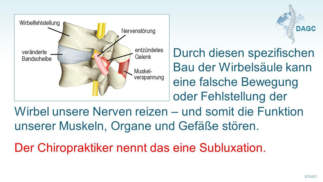 © DAGC DAGC Durch diesen spezifischen Bau der Wirbelsäule kann eine falsche Bewegung oder Fehlstellung der Wirbel unsere Nerven reizen – und somit die