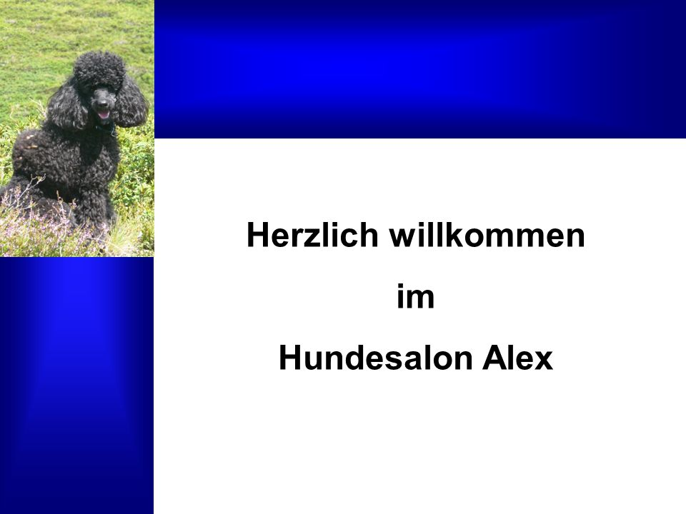 Herzlich willkommen im Hundesalon Alex