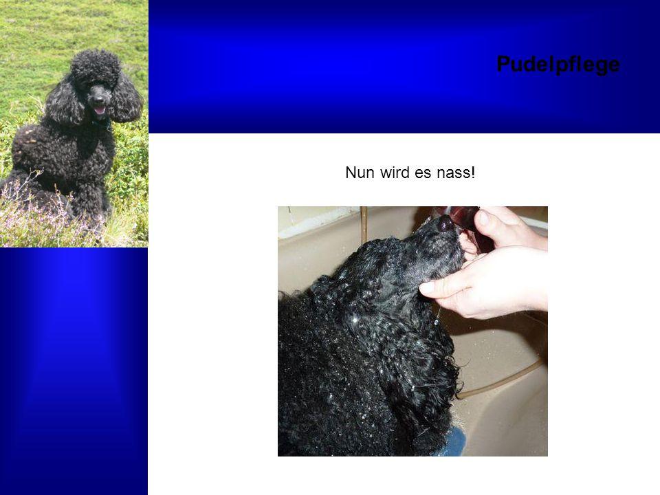 Schlusssatz Das Hundesalon Alex Team dankt allen Tierbesitzern herzlich!!!