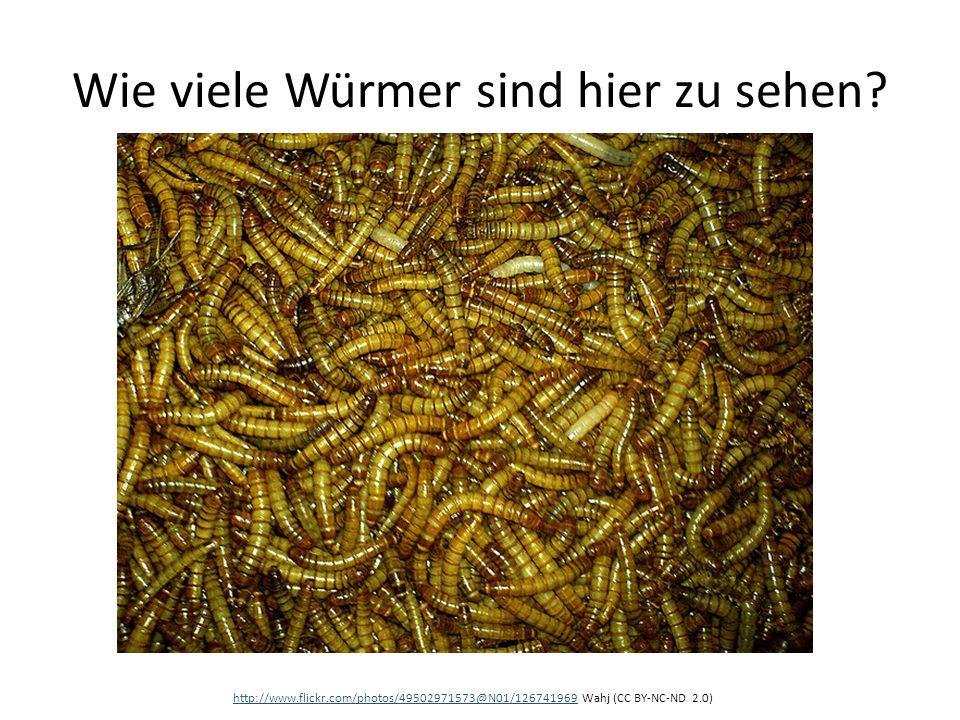 Wie viele Würmer sind hier zu sehen? http://www.flickr.com/photos/49502971573@N01/126741969http://www.flickr.com/photos/49502971573@N01/126741969 Wahj