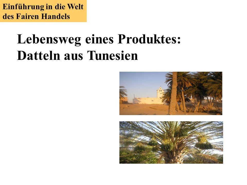 Lebensweg eines Produktes: Datteln aus Tunesien Einführung in die Welt des Fairen Handels