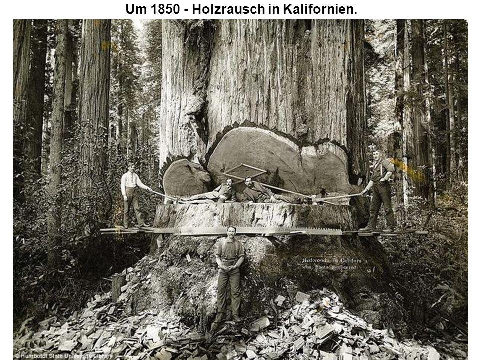 Um 1850 - Holzrausch in Kalifornien.