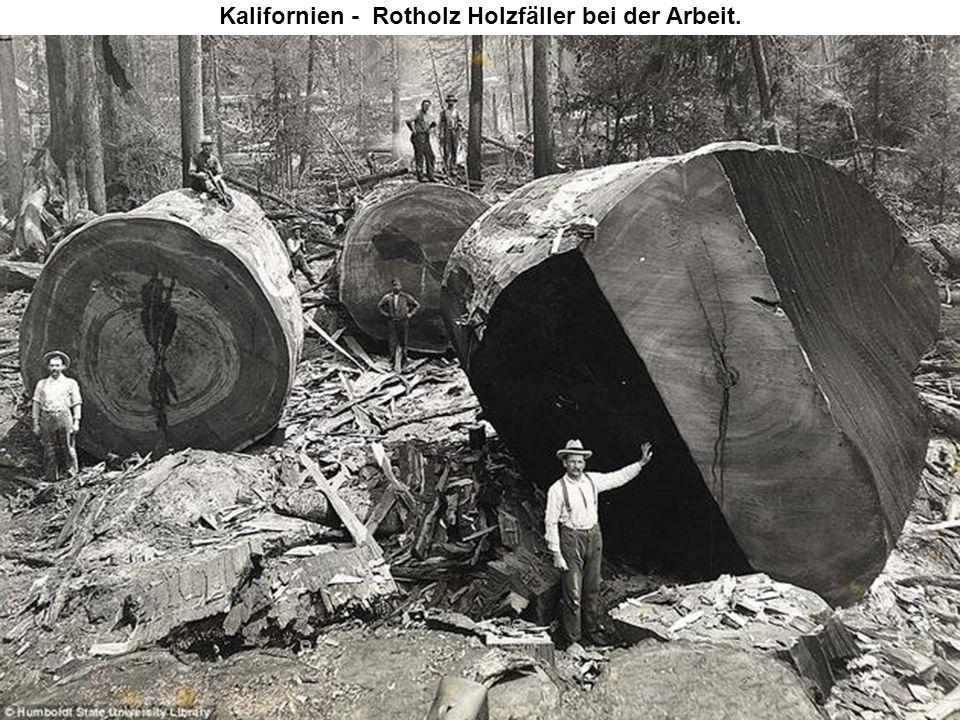 Kalifornien - Rotholz Holzfäller bei der Arbeit.