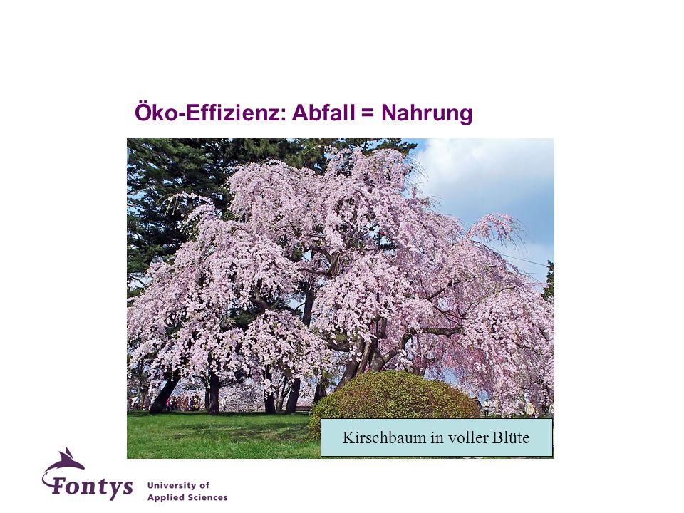 Kirschbaum in voller Blüte Öko-Effizienz: Abfall = Nahrung