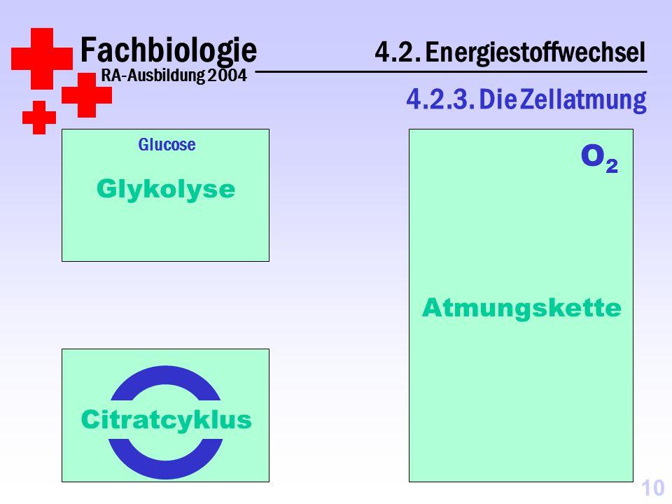 Fachbiologie 4.2.Energiestoffwechsel RA-Ausbildung 2004 4.2.3.