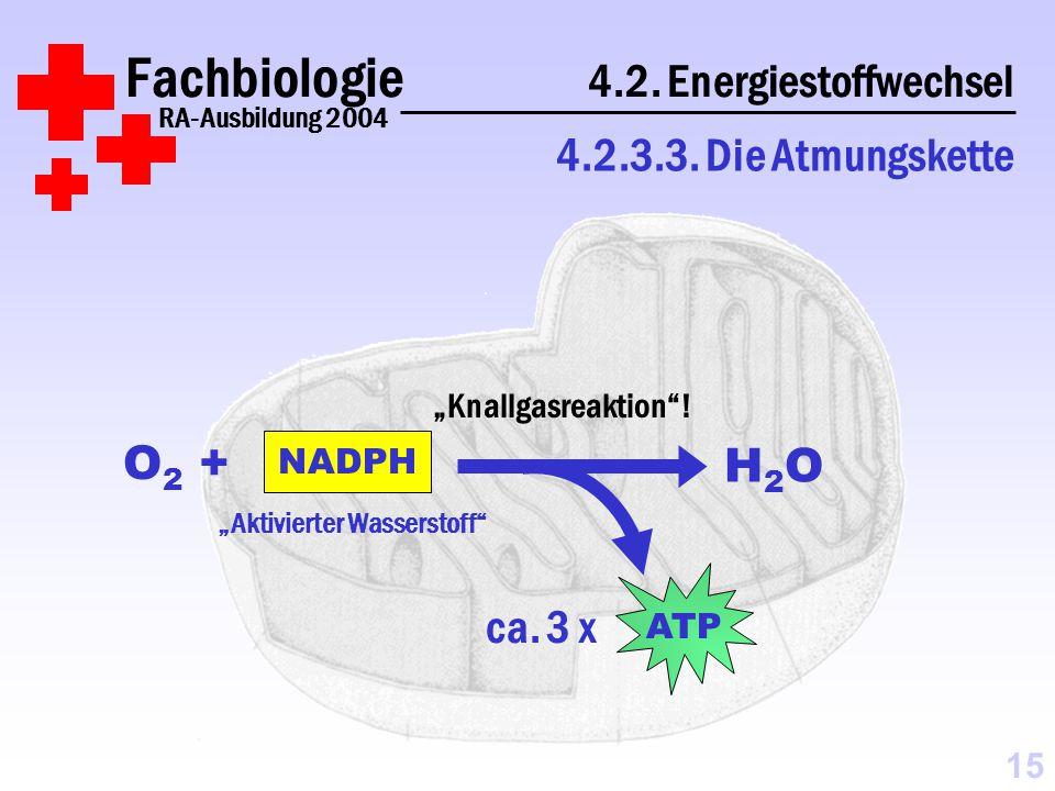 Fachbiologie 4.2.Energiestoffwechsel RA-Ausbildung 2004 4.2.3.3.