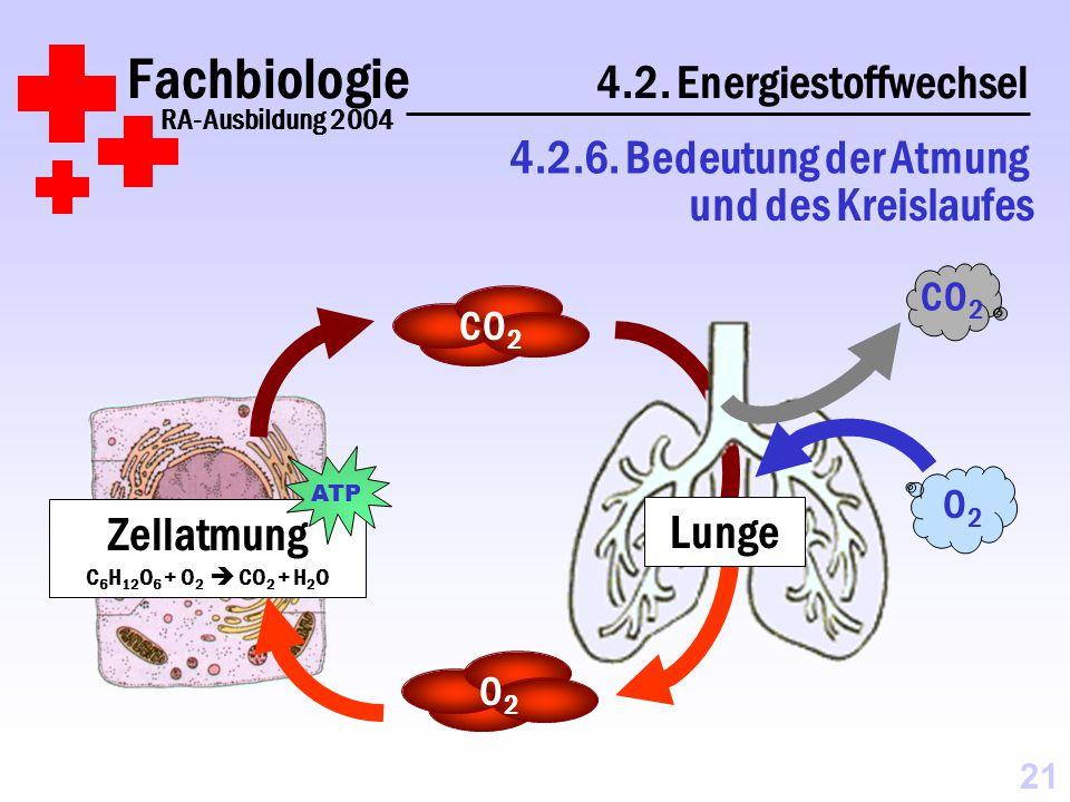 Fachbiologie 4.2.Energiestoffwechsel RA-Ausbildung 2004 4.2.6.
