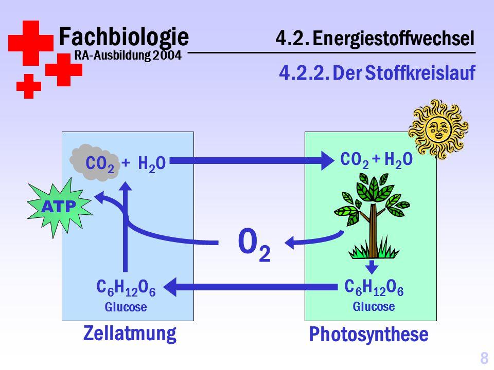 Zellatmung Fachbiologie 4.2.Energiestoffwechsel RA-Ausbildung 2004 4.2.2.