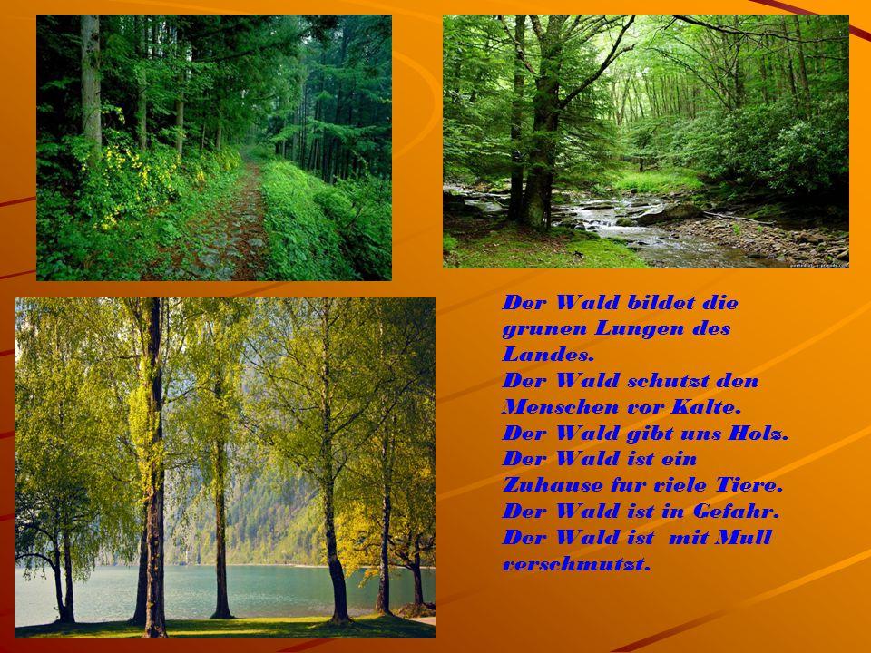 Der Wald bildet die grunen Lungen des Landes. Der Wald schutzt den Menschen vor Kalte. Der Wald gibt uns Holz. Der Wald ist ein Zuhause fur viele Tier