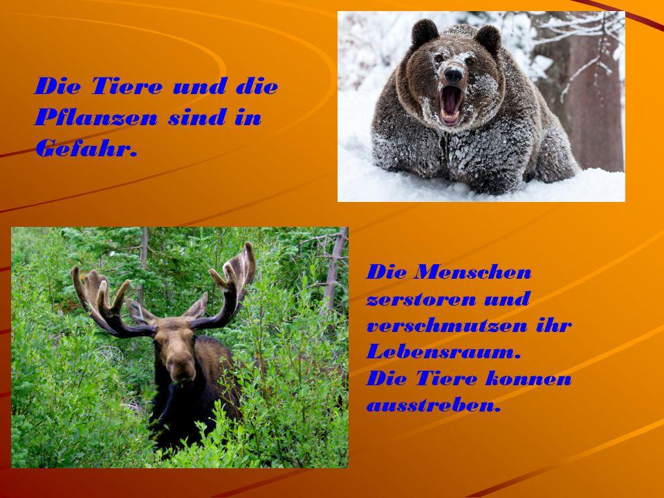 Die Tiere und die Pflanzen sind in Gefahr. Die Menschen zerstoren und verschmutzen ihr Lebensraum. Die Tiere konnen ausstreben.
