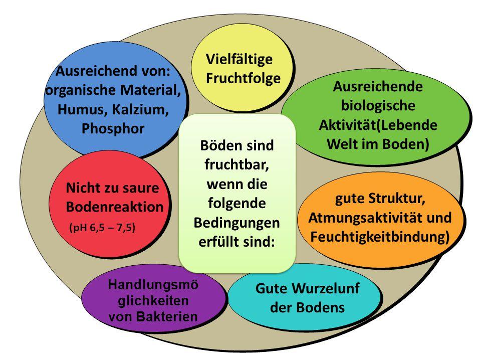 Handlungsmö glichkeiten von Bakterien Ausreichend von: organische Material, Humus, Kalzium, Phosphor Vielfältige Fruchtfolge Ausreichende biologische