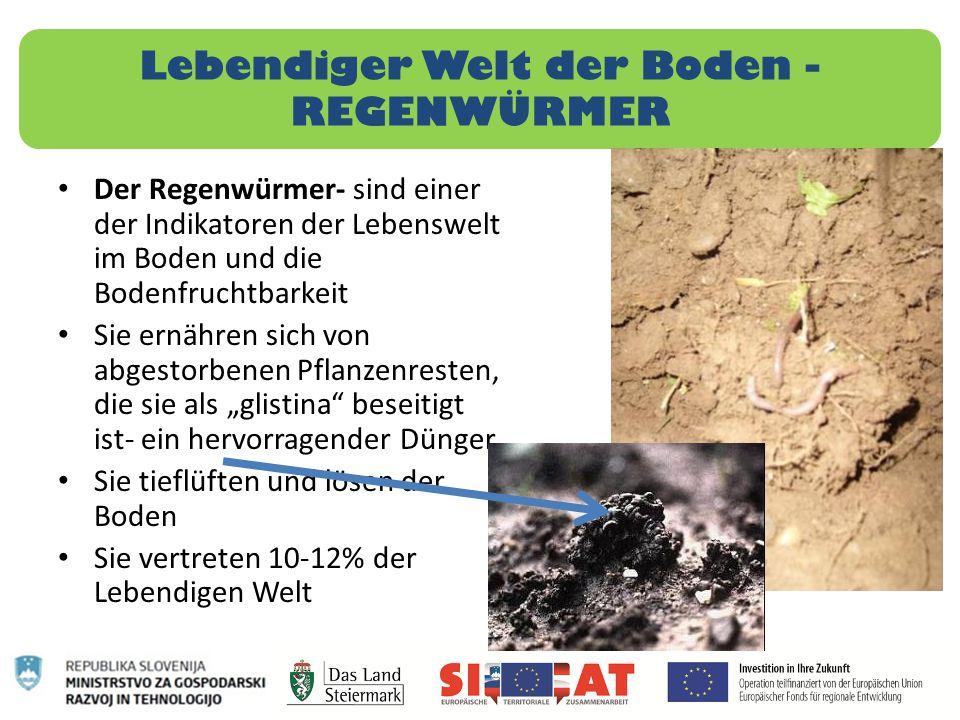Lebendiger Welt der Boden - REGENWÜRMER Der Regenwürmer- sind einer der Indikatoren der Lebenswelt im Boden und die Bodenfruchtbarkeit Sie ernähren si