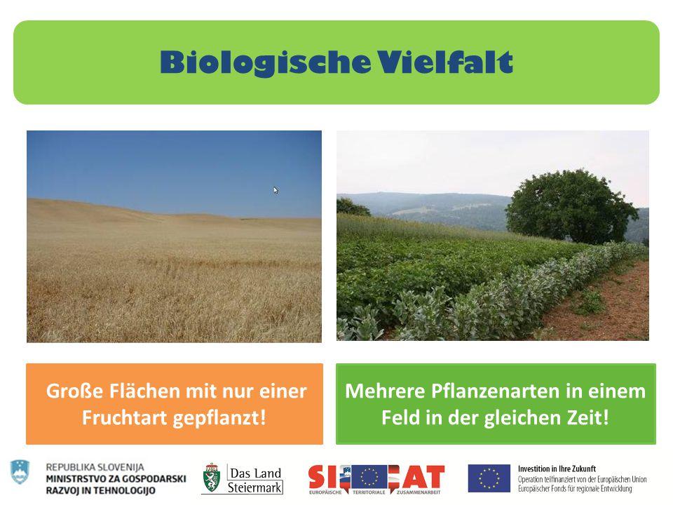Biologische Vielfalt Große Flächen mit nur einer Fruchtart gepflanzt! Mehrere Pflanzenarten in einem Feld in der gleichen Zeit!