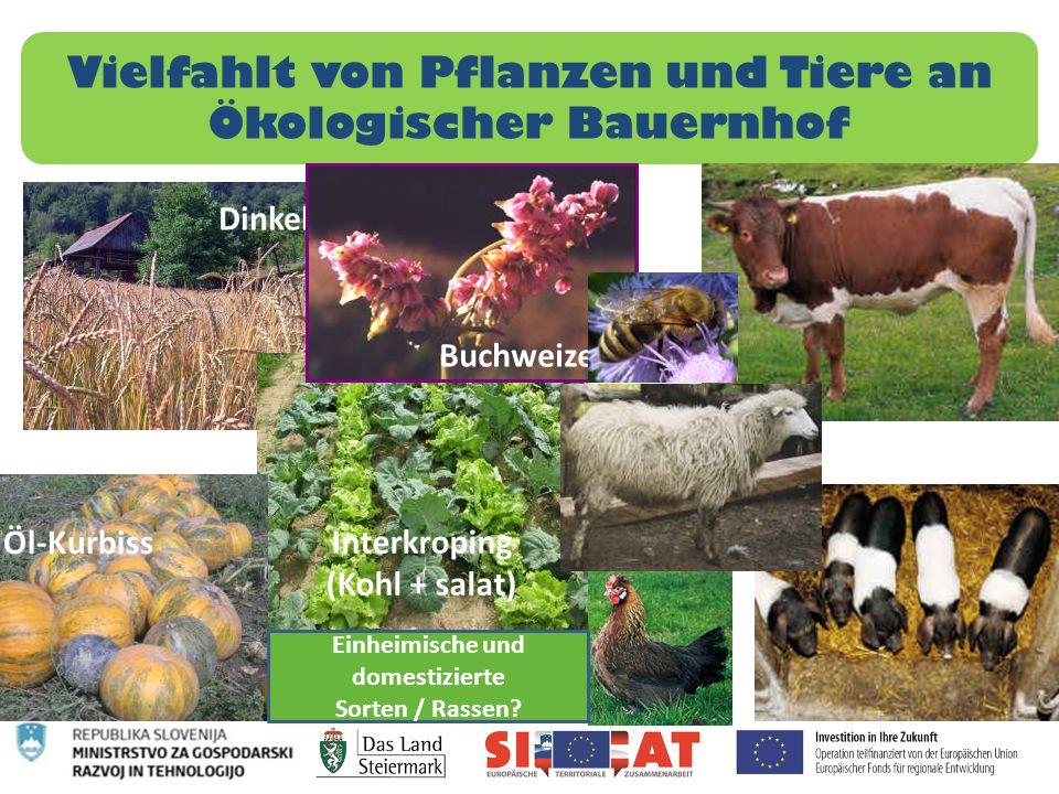 Vielfahlt von Pflanzen und Tiere an Ökologischer Bauernhof Dinkel Interkroping (Kohl + salat) Öl-Kurbiss Buchweizen Einheimische und domestizierte Sor
