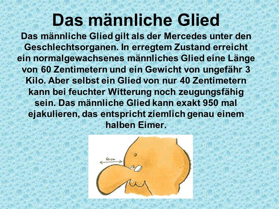 Das männliche Glied Das männliche Glied gilt als der Mercedes unter den Geschlechtsorganen. In erregtem Zustand erreicht ein normalgewachsenes männlic