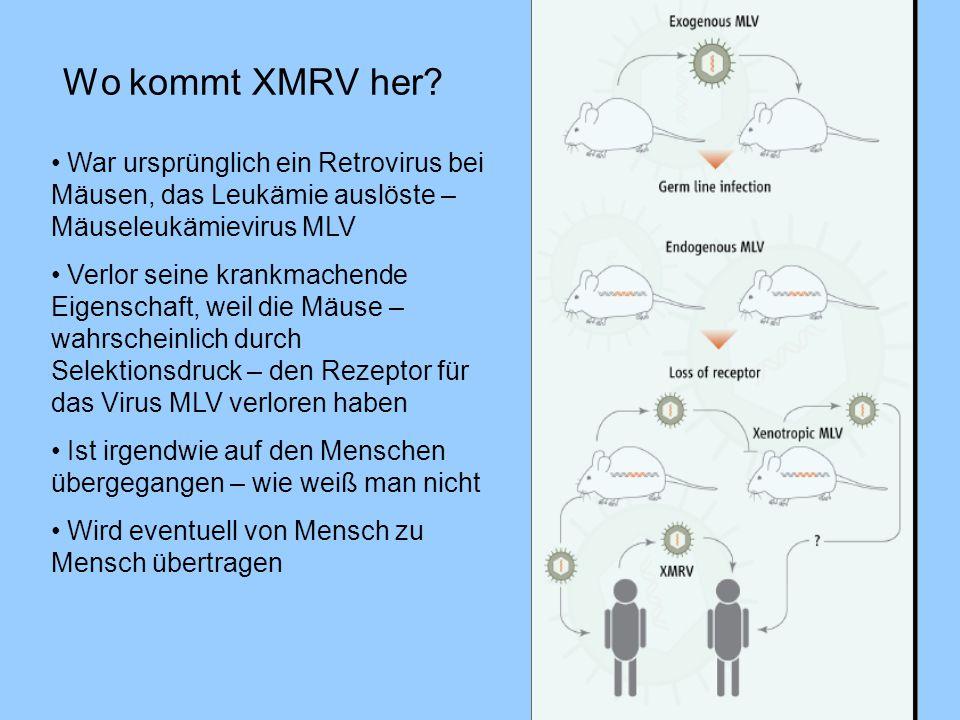 Wo kommt XMRV her? War ursprünglich ein Retrovirus bei Mäusen, das Leukämie auslöste – Mäuseleukämievirus MLV Verlor seine krankmachende Eigenschaft,