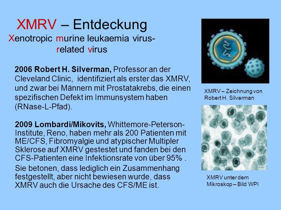 XMRV – Entdeckung Xenotropic murine leukaemia virus- related virus 2006 Robert H. Silverman, Professor an der Cleveland Clinic, identifiziert als erst