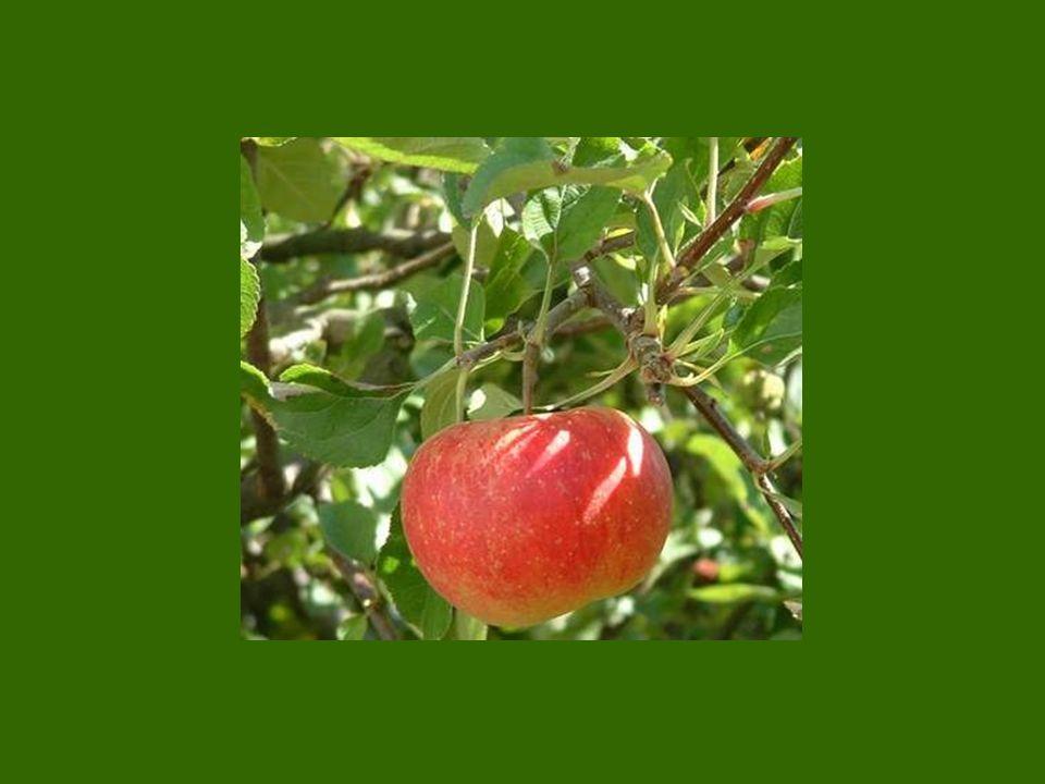 Wert Die Kohle im Boden oder der Apfel am Baum sind nichts Wert.