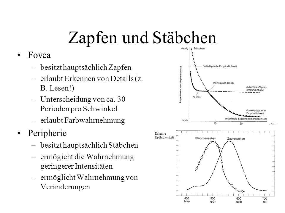Zapfen und Stäbchen Fovea –besitzt hauptsächlich Zapfen –erlaubt Erkennen von Details (z. B. Lesen!) –Unterscheidung von ca. 30 Perioden pro Sehwinkel