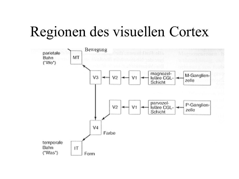 Regionen des visuellen Cortex Bewegung