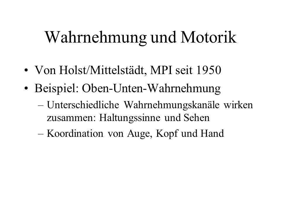 Wahrnehmung und Motorik Von Holst/Mittelstädt, MPI seit 1950 Beispiel: Oben-Unten-Wahrnehmung –Unterschiedliche Wahrnehmungskanäle wirken zusammen: Ha