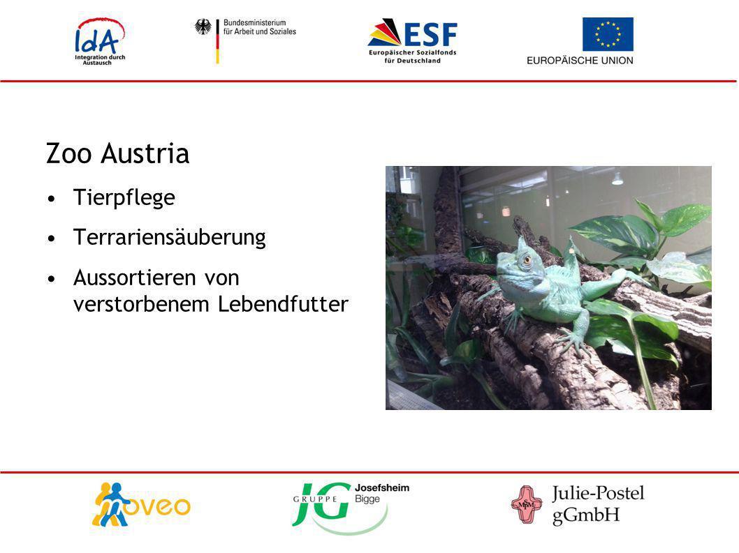 Zoo Austria Tierpflege Terrariensäuberung Aussortieren von verstorbenem Lebendfutter