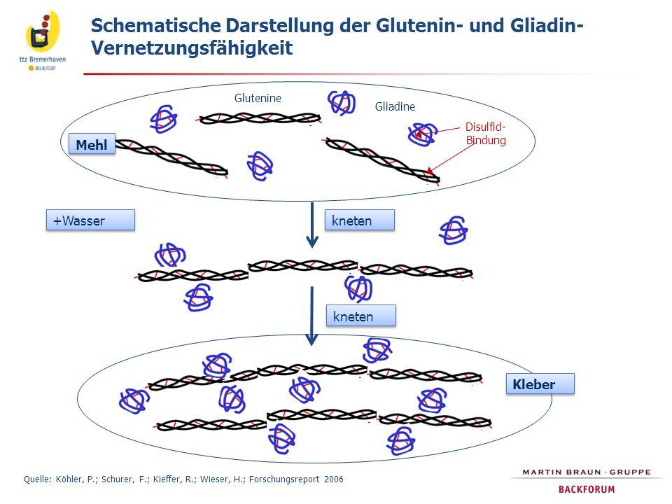 Schematische Darstellung der Glutenin- und Gliadin- Vernetzungsfähigkeit Quelle: Köhler, P.; Schurer, F.; Kieffer, R.; Wieser, H.; Forschungsreport 20
