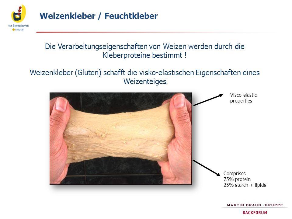 Die Verarbeitungseigenschaften von Weizen werden durch die Kleberproteine bestimmt ! Weizenkleber (Gluten) schafft die visko-elastischen Eigenschaften