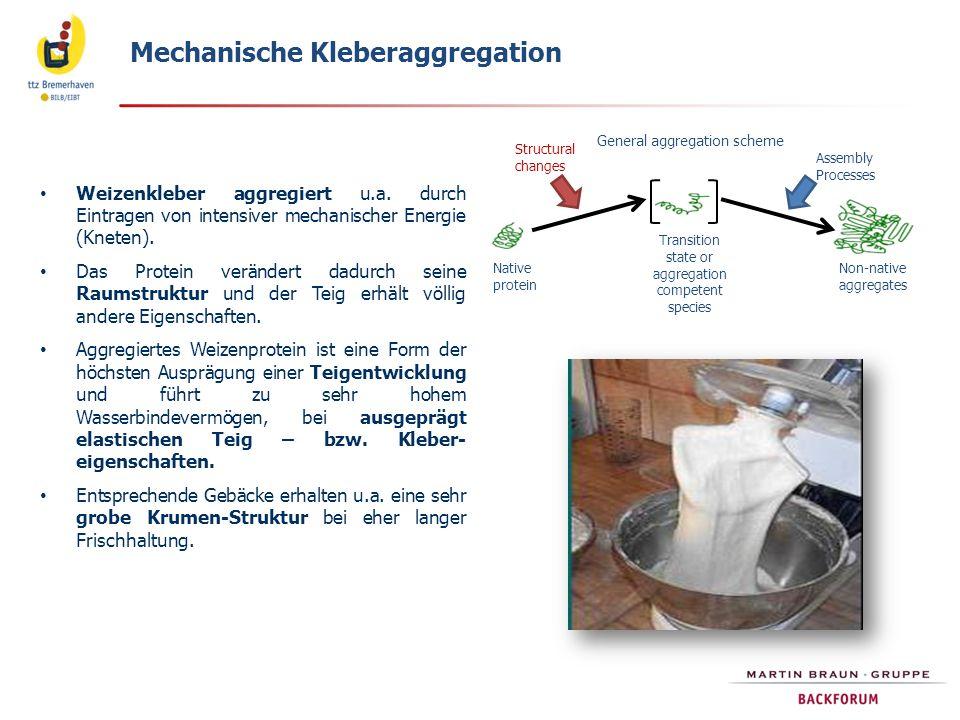 Weizenkleber aggregiert u.a. durch Eintragen von intensiver mechanischer Energie (Kneten). Das Protein verändert dadurch seine Raumstruktur und der Te