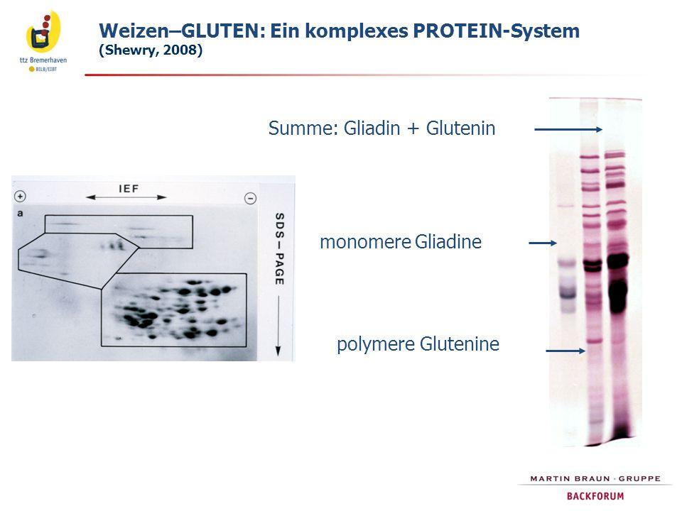 monomere Gliadine polymere Glutenine Summe: Gliadin + Glutenin Weizen–GLUTEN: Ein komplexes PROTEIN-System (Shewry, 2008)