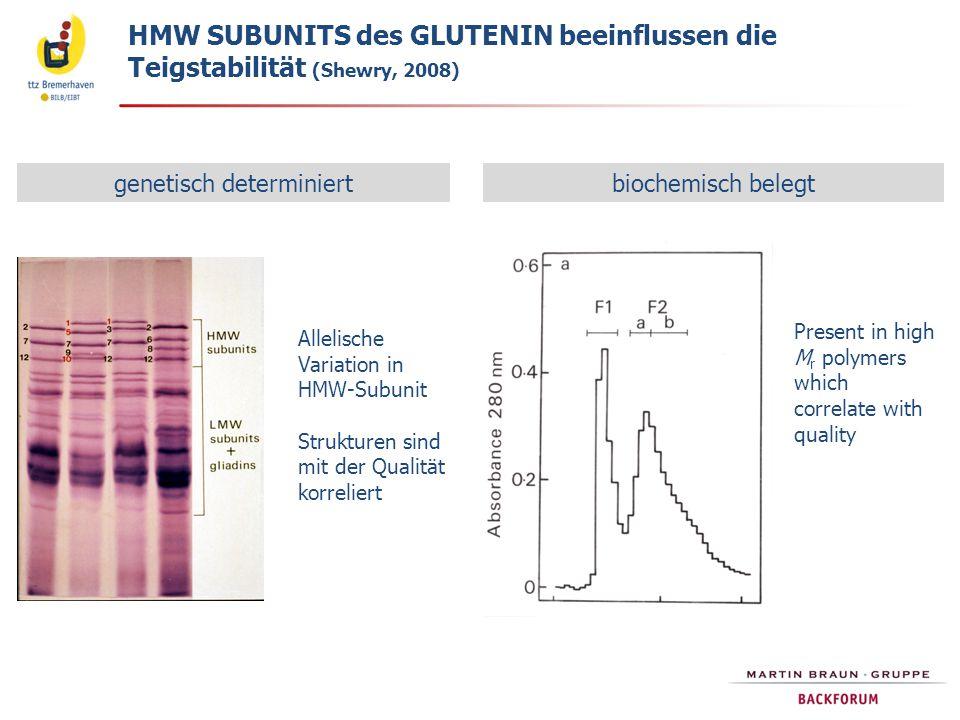 genetisch determiniertbiochemisch belegt Allelische Variation in HMW-Subunit Strukturen sind mit der Qualität korreliert Present in high M r polymers which correlate with quality HMW SUBUNITS des GLUTENIN beeinflussen die Teigstabilität (Shewry, 2008)