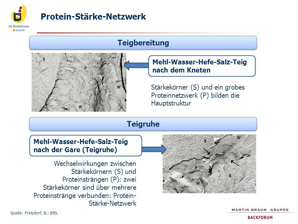 Quelle: Fretzdorf, B.; BfEL Teigbereitung Teigruhe Mehl-Wasser-Hefe-Salz-Teig nach dem Kneten Stärkekörner (S) und ein grobes Proteinnetzwerk (P) bild