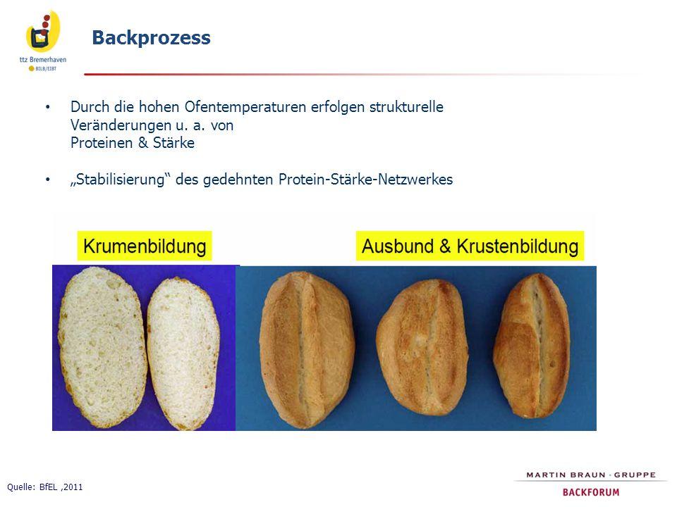 """Backprozess Quelle: BfEL,2011 Durch die hohen Ofentemperaturen erfolgen strukturelle Veränderungen u. a. von Proteinen & Stärke """"Stabilisierung"""" des g"""