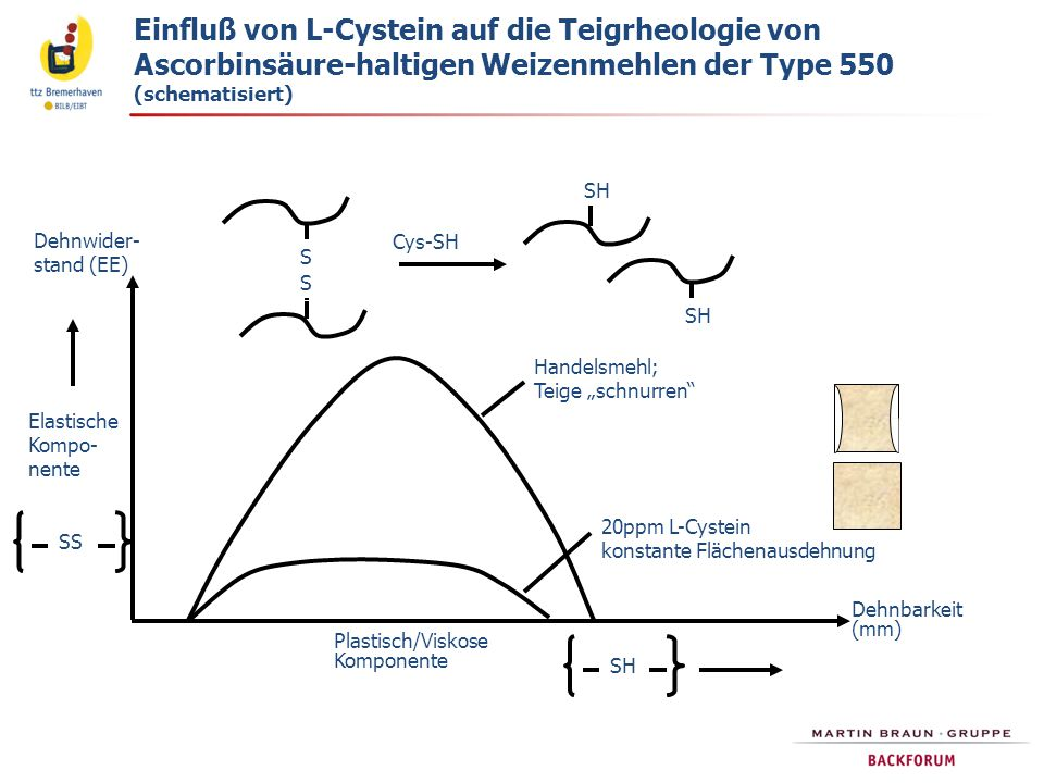 """Dehnwider- stand (EE) Dehnbarkeit (mm) Plastisch/Viskose Komponente SH Elastische Kompo- nente SS Handelsmehl; Teige """"schnurren 20ppm L-Cystein konstante Flächenausdehnung S S SH Cys-SH Einfluß von L-Cystein auf die Teigrheologie von Ascorbinsäure-haltigen Weizenmehlen der Type 550 (schematisiert)"""