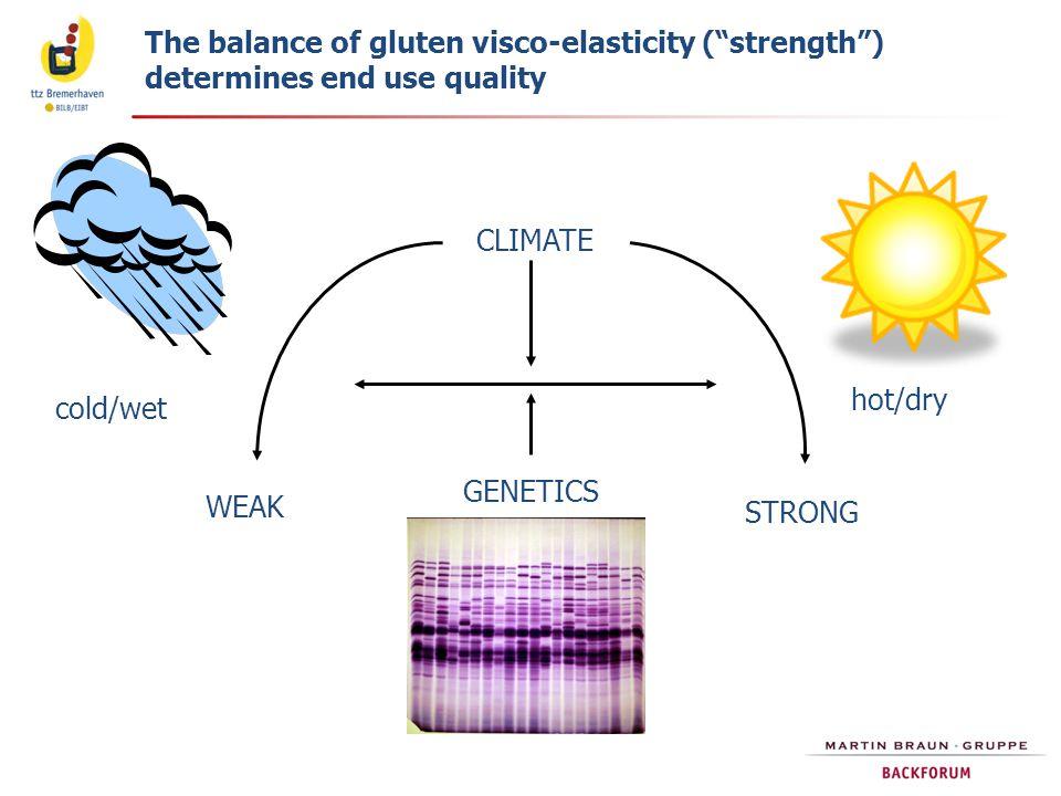 Schematische Struktur von Weizenkleber und seine funktionellen Eigenschaften (Gliadin ist ein Lipoproteid) Weizenkleber Lipide SH SSSS SSSS