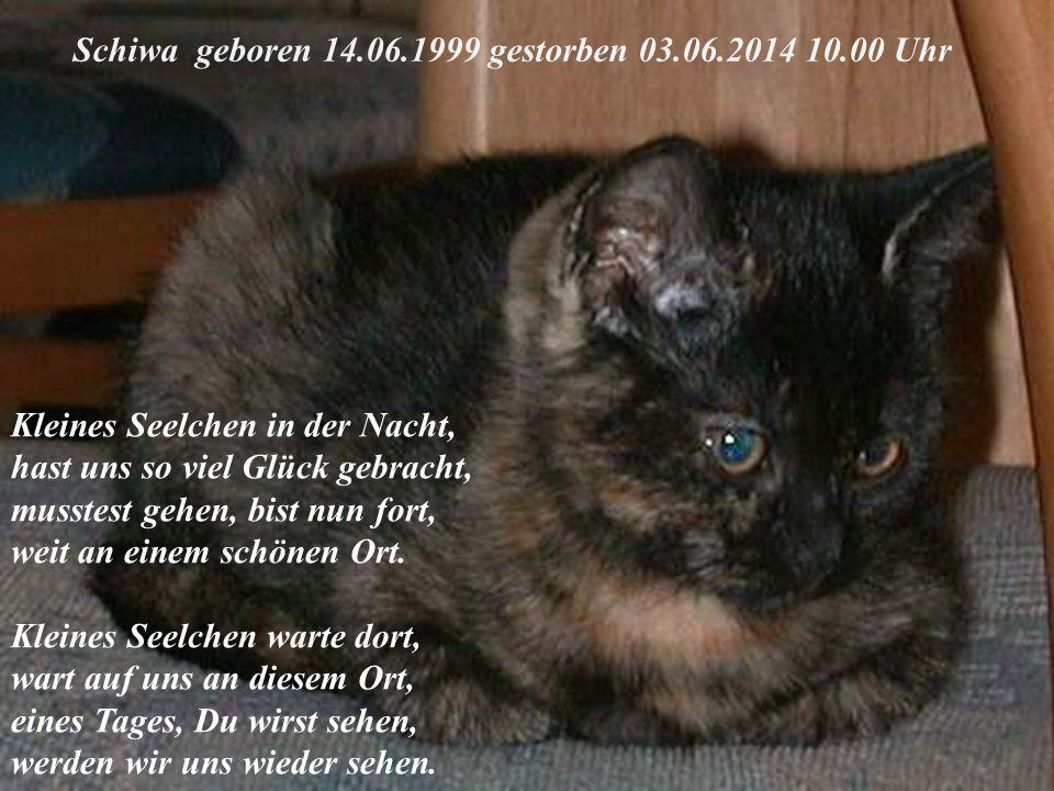 Schiwa geboren 14.06.1999 gestorben 03.06.2014 10.00 Uhr Kleines Seelchen in der Nacht, hast uns so viel Glück gebracht, musstest gehen, bist nun fort, weit an einem schönen Ort.