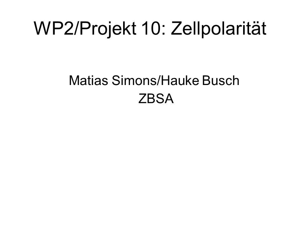 WP2/Projekt 10: Zellpolarität Matias Simons/Hauke Busch ZBSA