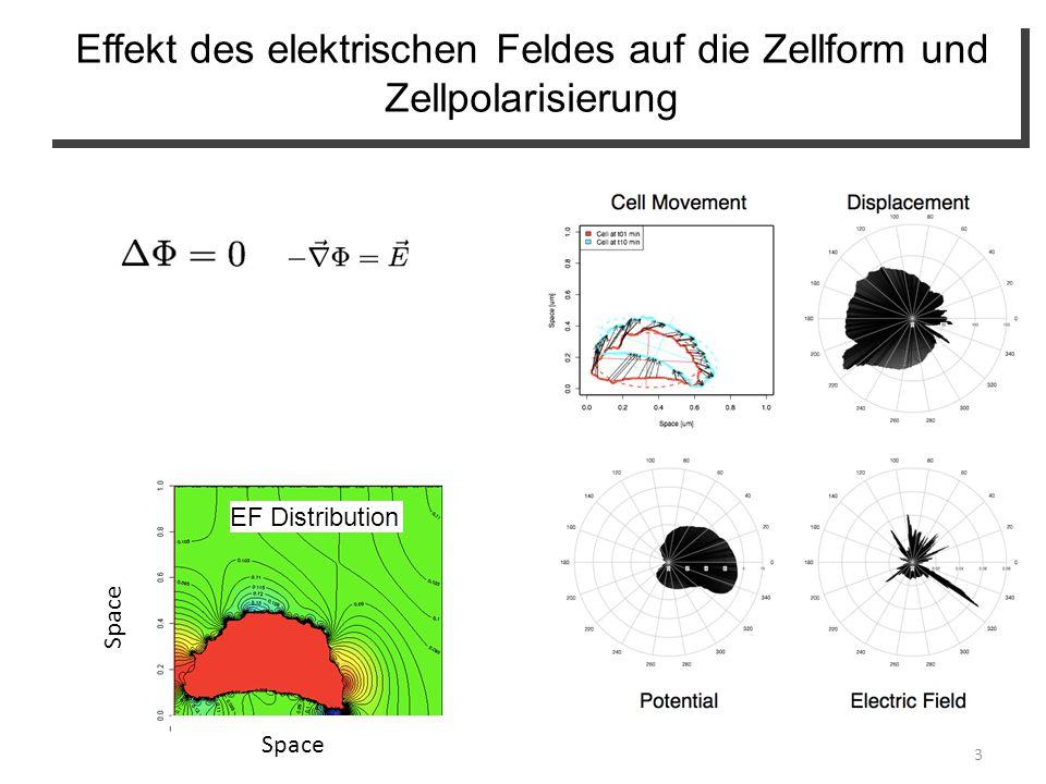 3 Space EF Distribution Effekt des elektrischen Feldes auf die Zellform und Zellpolarisierung