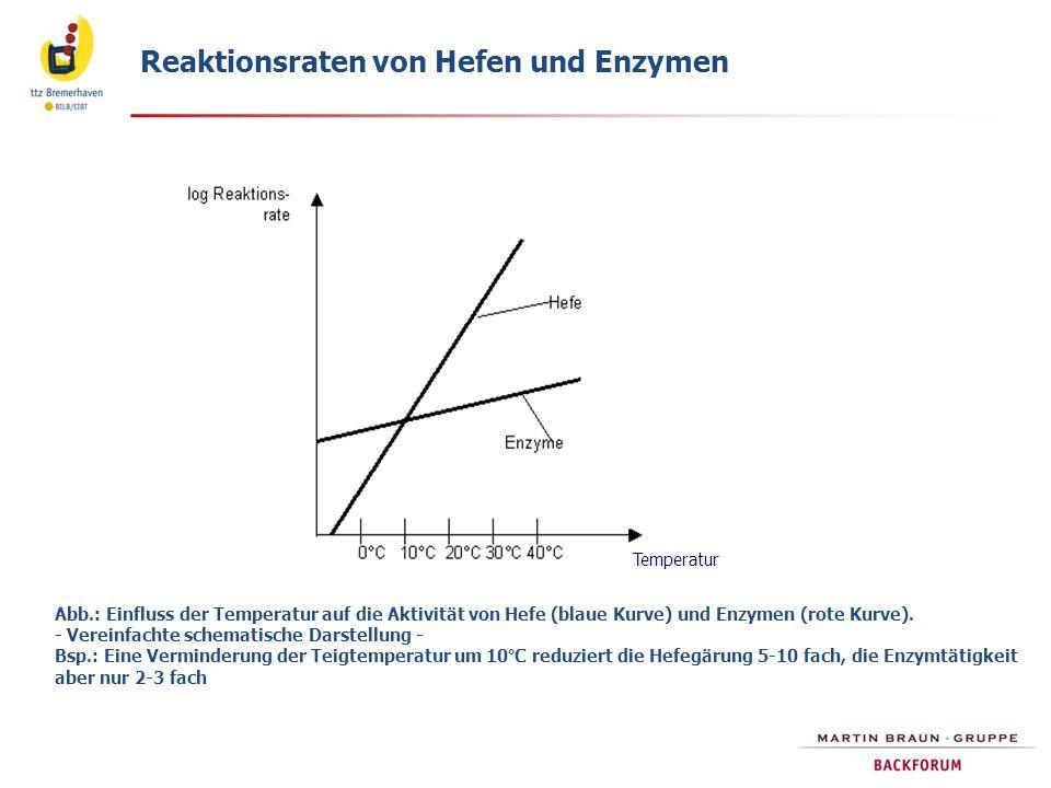 Abb.: Einfluss der Temperatur auf die Aktivität von Hefe (blaue Kurve) und Enzymen (rote Kurve). - Vereinfachte schematische Darstellung - Bsp.: Eine