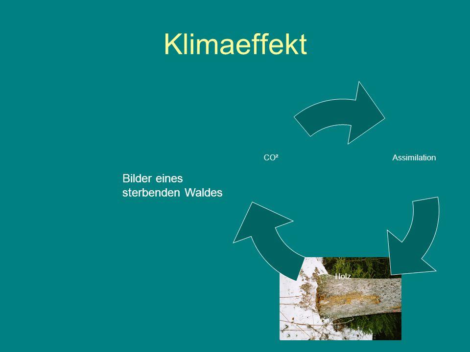 Klimaeffekt Assimilation Holz CO² Bilder eines sterbenden Waldes