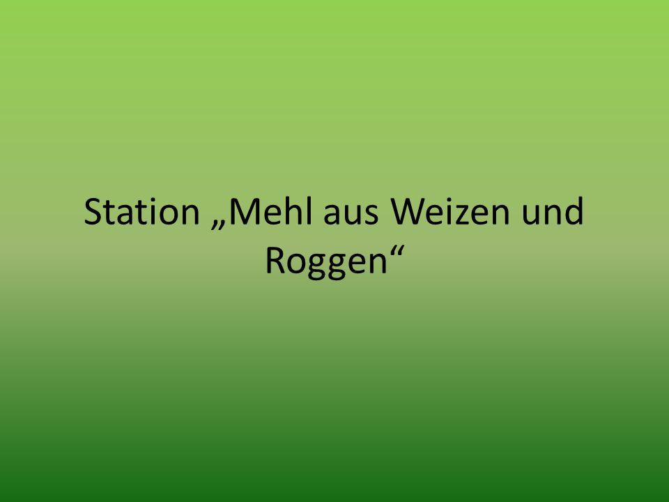"""Station """"Mehl aus Weizen und Roggen"""""""